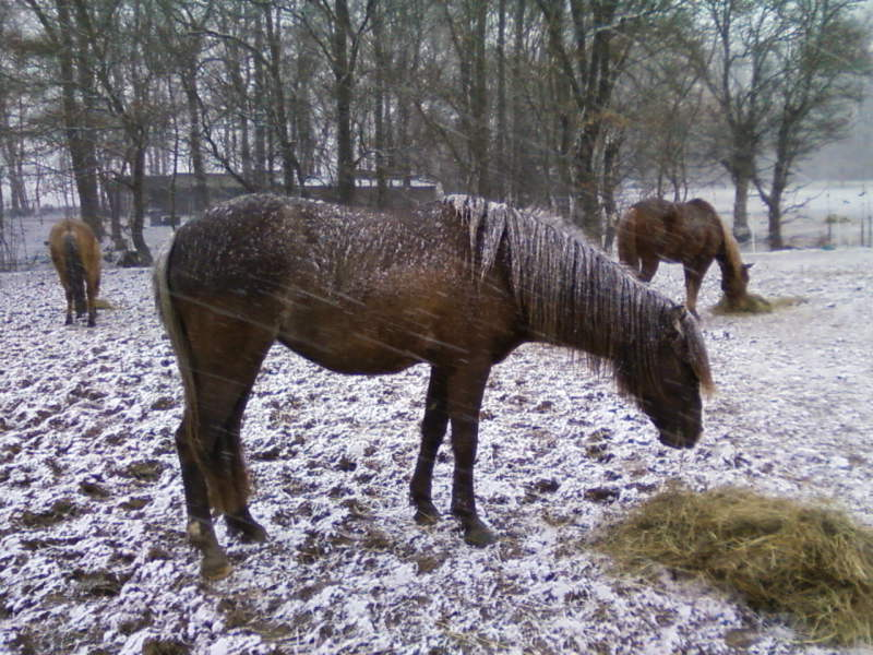 bien tondre son cheval