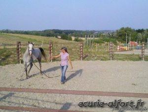 El Neshaky dans le rond de longe - Equitation éthologique