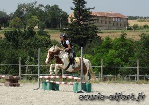 L'obstacle du G4, Nestor et L. - Equitation éthologique